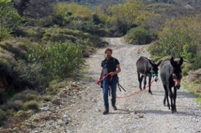 gallery/mandali-donkeys-walking